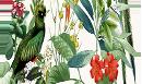 Южноамериканские попугаи
