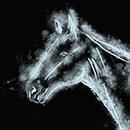Задумчивый конь