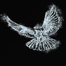 Порхающая голубка