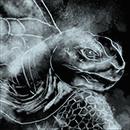 Алмазная черепаха