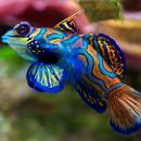 Рыба-мыслитель