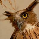 Молчаливая сова