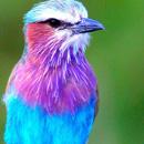 Птица-командир