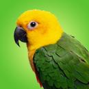 Радужный попугай-будильник