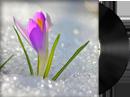 Весна в Аргемоне